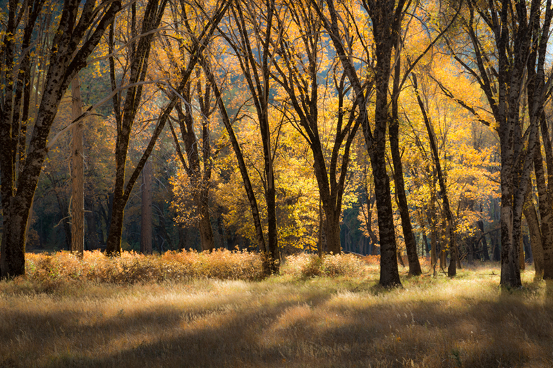 Yosemite Valley, yosemite, valley, ca, california, sierra, mountains, trees, black oak, black, oaks, valley view, fall, colors, el capitan, meadow, storm, photo