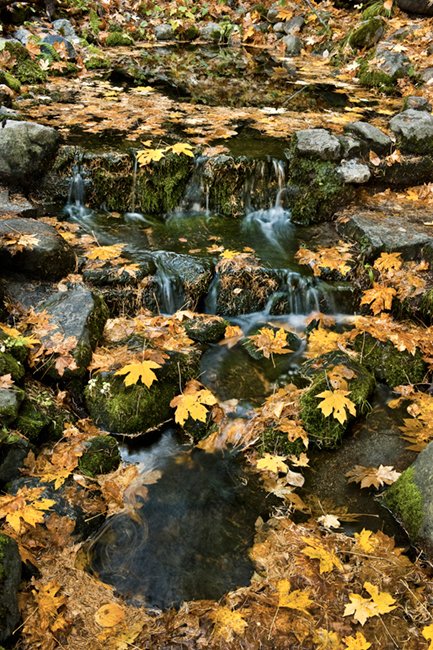 fern springs, fern, spring, fall, ca, california, sierra, mountains, valley, yosemite, colors, leaves, maple, trees, water, photo