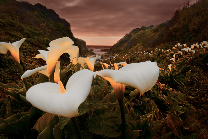 coast, coastal, water, pacific, big sur, sur, big, highway 1, hwy 1, ca, california,  sunset, twilight, ocean,  garrapata,  soberanes, beach, surf, waves, sea stacks, arch, beach, calla, lily, lilies, photo