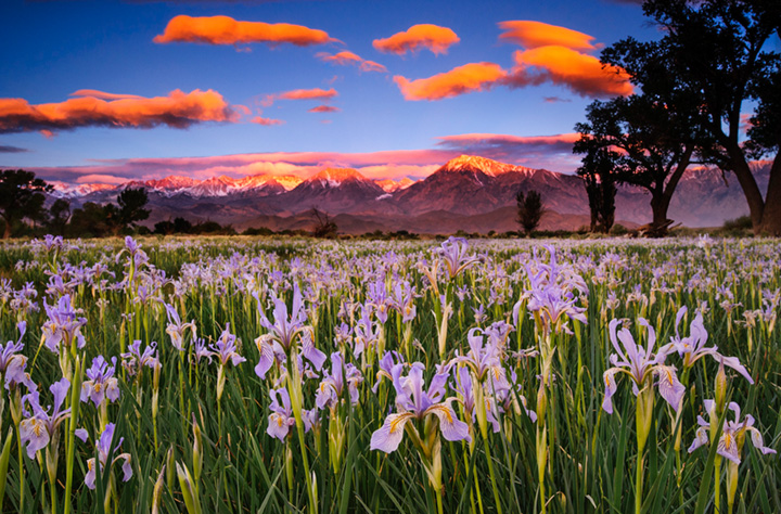 iris, sunrise, sierra, clouds, ca, california, spring, wildflowers, bishop, mountains, owens river valley, owens river, photo