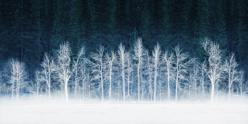 frost, lei pig, meadow, trees, cottonwoods, snow, winter, sierra, mountains, yosemite, ca, california, photo