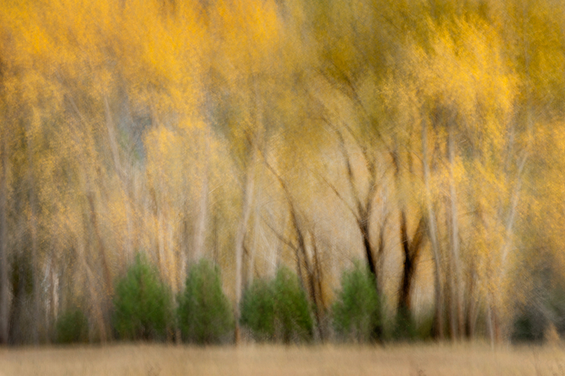 leipig, meadow, morning, yosemite, valley, trees, sierra, mountains, ca, california, cottonwoods, fall, impressions, photo