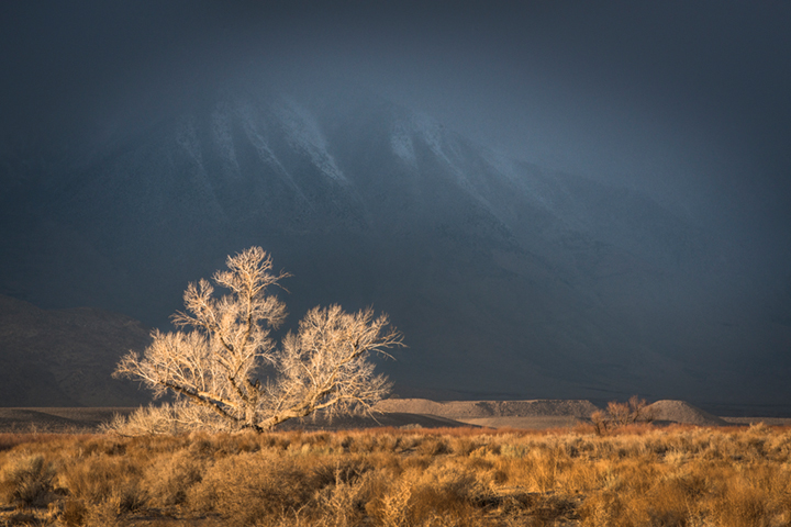 eastern sierra, sierra, cottonwood, fall, ca, california, trees, storm, winter, sunrise, bishop, mountains, owens river valley, owens river, photo