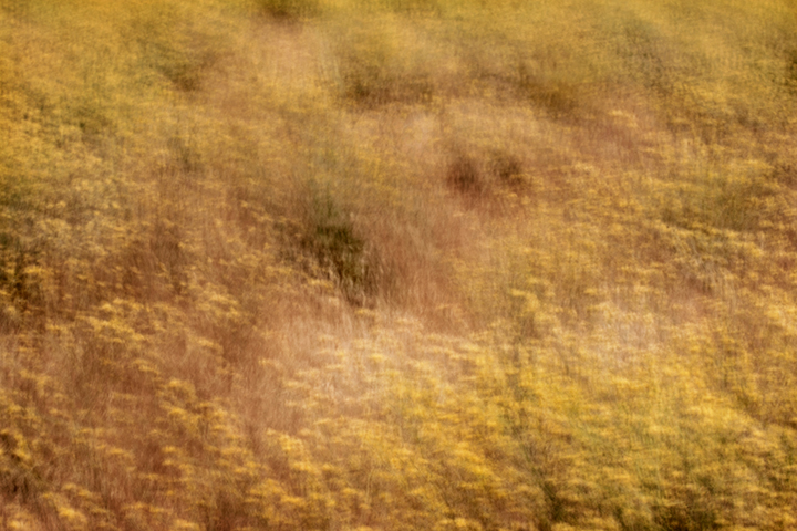 california, yosemite, grasses, plants, flora, impressions, movement, gold country, northern california, ca, california, photo