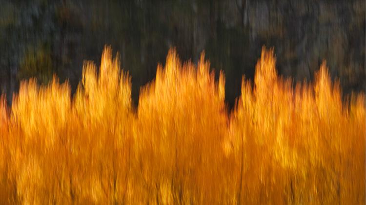 bishop, california, sierra, aspens, fall, color, trees, movement, impressions, north lake, sabrina, ca, photo