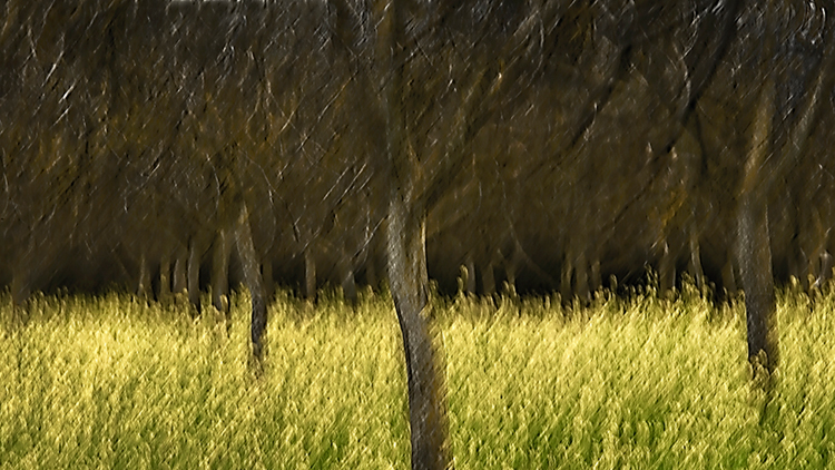 mustard, orchard, impressions, california, plants, grasses, trees, movement, northern california, ca, photo