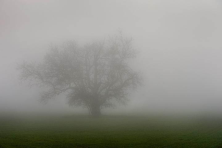 fog, santa barbara, live, oak, ca, california, coast, photo