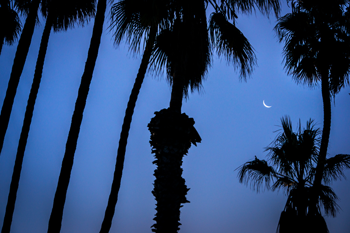palms, sunrise, santa barbara, trees, coast, ca, california, beach, pacific, moon, moonrise