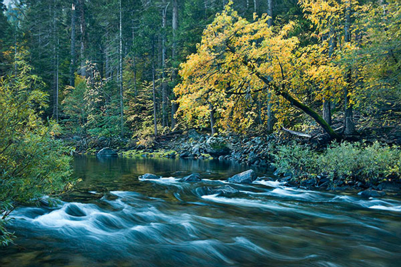 yosemite, pohono, water, yosemite, valley, fall, sierra, mountains, ca, california, merced, river, dogwood, trees, photo