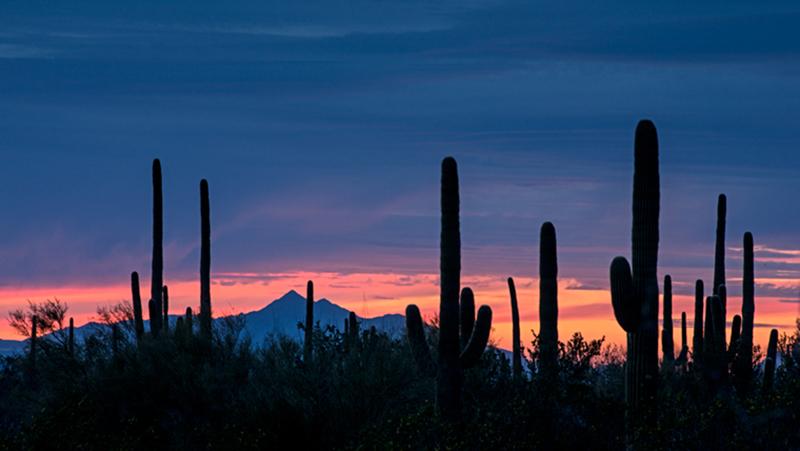 saguaro national park, saguaro, cactus, cacti, sunrise, AZ, arizona, desert, plants, southwest, , photo