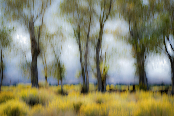 bishop, california, sierra, cottonwoods, trees, sage, movement, impressions, ca, california, photo