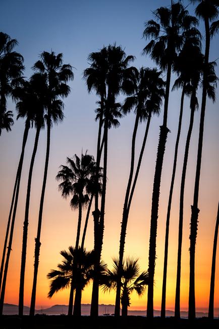 palms, sunrise, santa barbara, trees, coast, ca, california, beach, pacific, photo