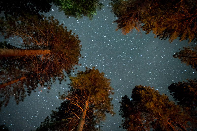 Yosemite Valley, yosemite, valley, ca, california, sierra, mountains, trees, spring, stars, pines, photo