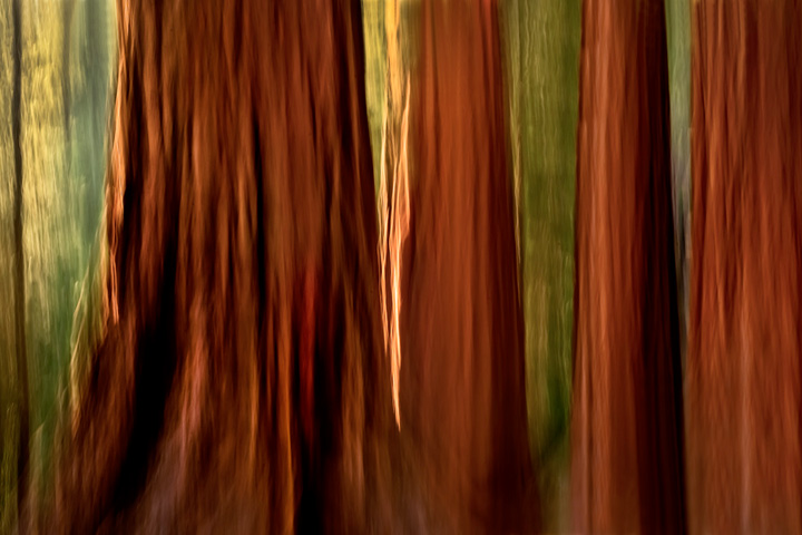 yosemite, mariposa grove, sequoia, mountains, sierra, trees, impressions, movement, northern california, california, ca, photo