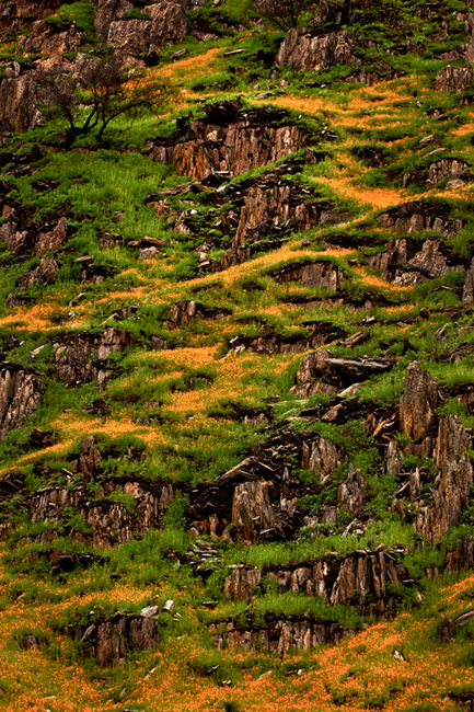 <p>wildflowers, merced, river, canyon, ca, california, poppies, rocks, spring, sierra, mountains</p>, photo