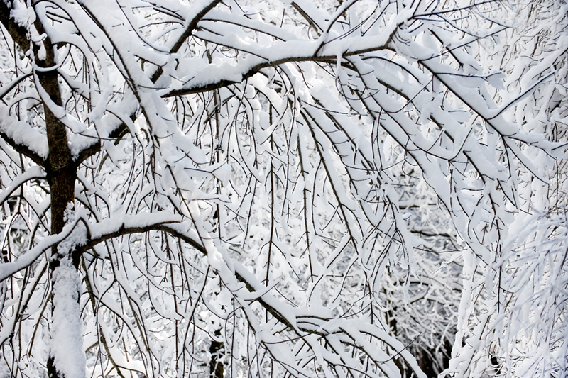 curry village, snow, storm, trees, yosemite, ca, california, sierra, mountains, landscape, valley, winter, photo
