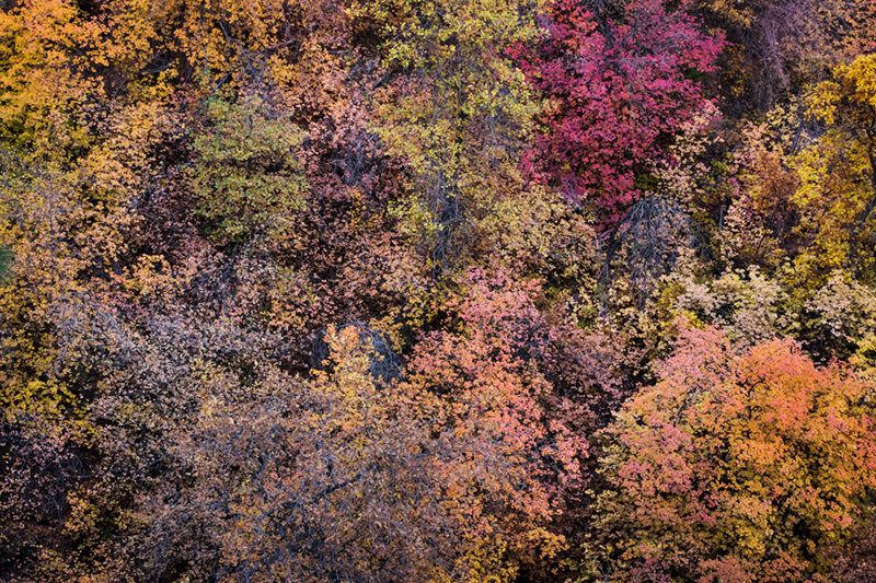 trees, fall, fall color, zion, mountains, utah, ut, southwest, photo