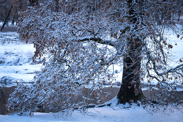 yosemite, national park, ca, california, mountains, sierra, water, valley, sunrise, snow, winter, colors flora, trees, black...