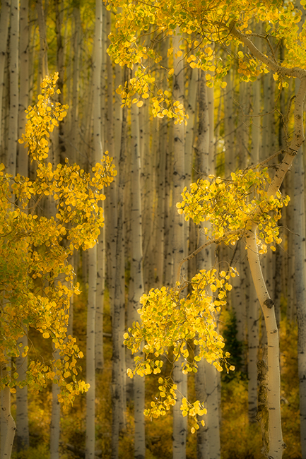 colorado, co, san juan mountains, mountains. trees, aspens, fall, fog, atmospherics, owl creek, ridgway, snow, flora, autumn, rockies, kebler pass, photo