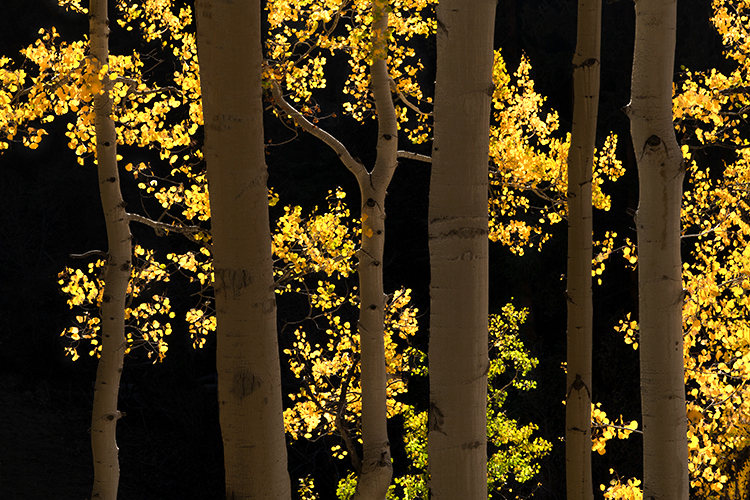 colorado, co, fall, san juan, owl creek, aspens, trees, flora, mountains, colorado plateau, sunrise, dallas divide, ridgway, backlight, rockies, rocky mountains, national park, photo