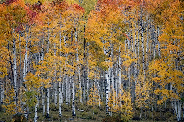Rocky Mountains, San Juan mountains, rockies, san juans, fall, autumn, colors, trees, aspen, pine, fir, colorado, co, durango, , photo
