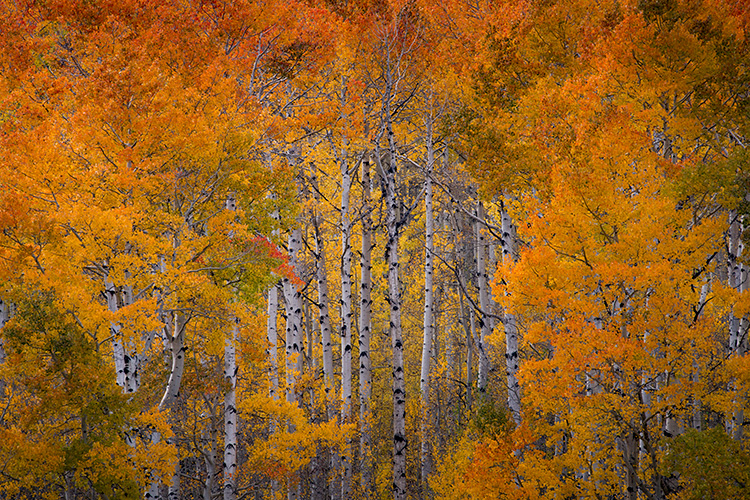 Rocky Mountains, San Juan mountains, rockies, san juans, fall, autumn, colors, trees, aspen, pine, fir, colorado, co, durango, , photo