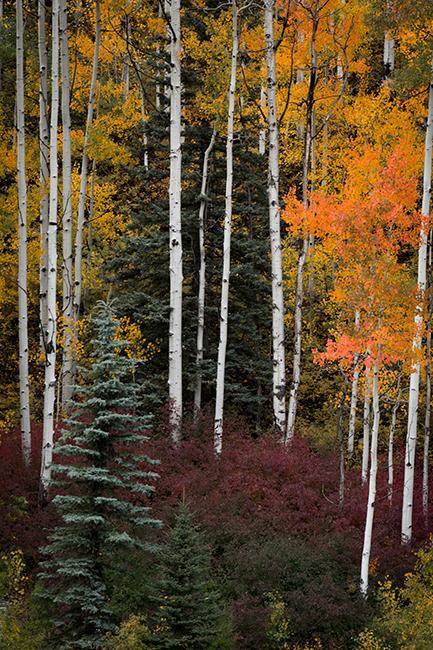 Rocky Mountains, San Juan mountains, rockies, san juans, fall, autumn, colors, trees, aspen, pine, fir, colorado, co, durango,, photo