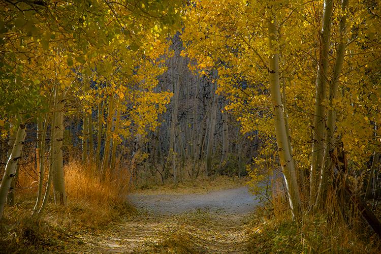 Eastern Sierra, Sierra, CA, California, Fall, mountains, foliage, leaves, autumn, aspens, flora, trees, water, bishop, creek, rock creek, light, photo