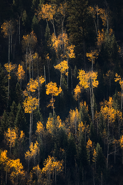 mountains, Wyoming, wy, Tetons, Grand Teton Park, landscape, Fall, trees, aspens, fall color, jackson, oxbow bend, sunrise, snake river, photo