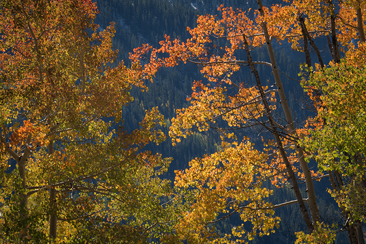 Rocky Mountains, San Juan mountains, rockies, san juans, fall, autumn, color, trees, aspen, pine, fir, colorado, co, owl creek, fog, aspens, photo