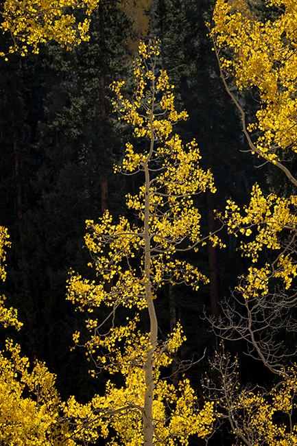 colorado, co, fall, san juan, owl creek, aspens, trees, flora, mountains, colorado plateau, sunrise, dallas divide, ridgway...