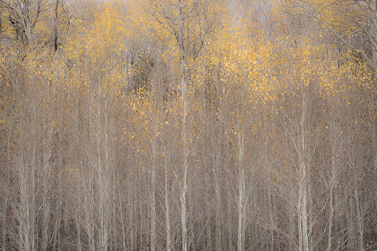 Green river, wy, wyoming, aspens, fall, colors, mountains, wind river mountains, pinedale, color, photo