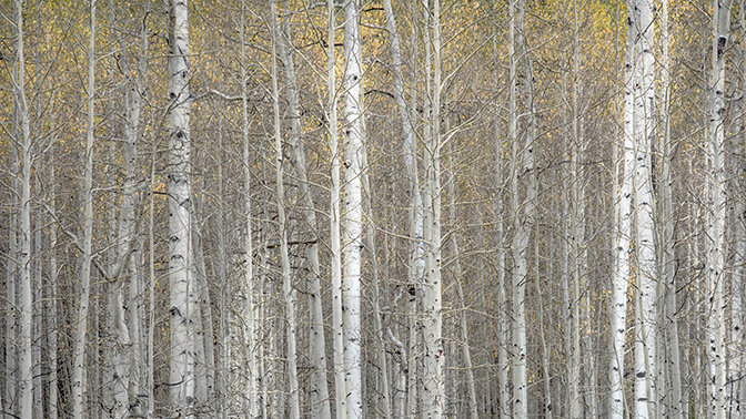 fall colors, fall, aspens, trees, mountains, wy, wyoming, wind river, winds, rockies, photo