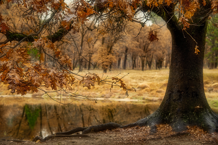 yosemite, fall, national park, sierra, mountains, trees, merced, river, sierra nevada, water, yosemite valley, photo