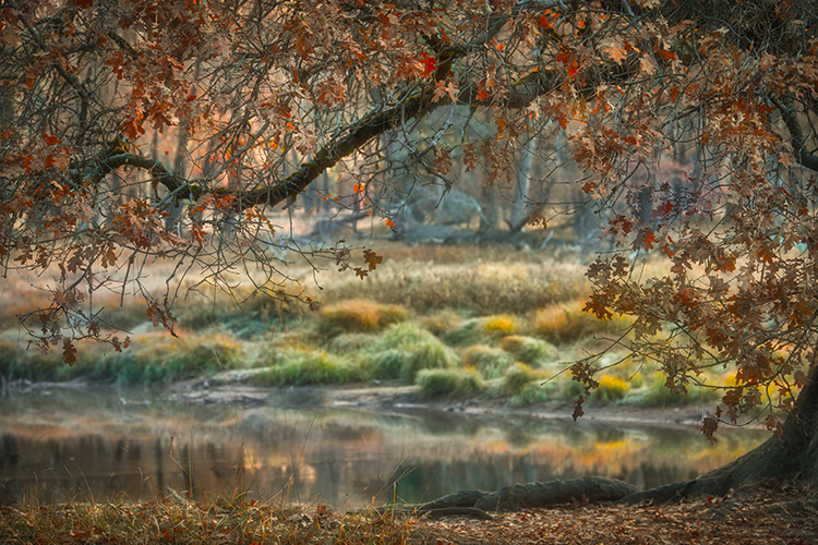 merced river, merced, yosemite, valley, mountains, sierra, trees, sunrise, light, black oak, fall, ca, california, water, trees, flora, fall, sunrise, photo