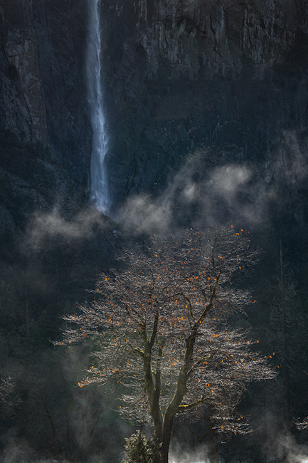 yosemite national park, yosemite, ca, california, trees, black oak, meadow, el capitan, flora, bridalveil falls, falls, water, photo