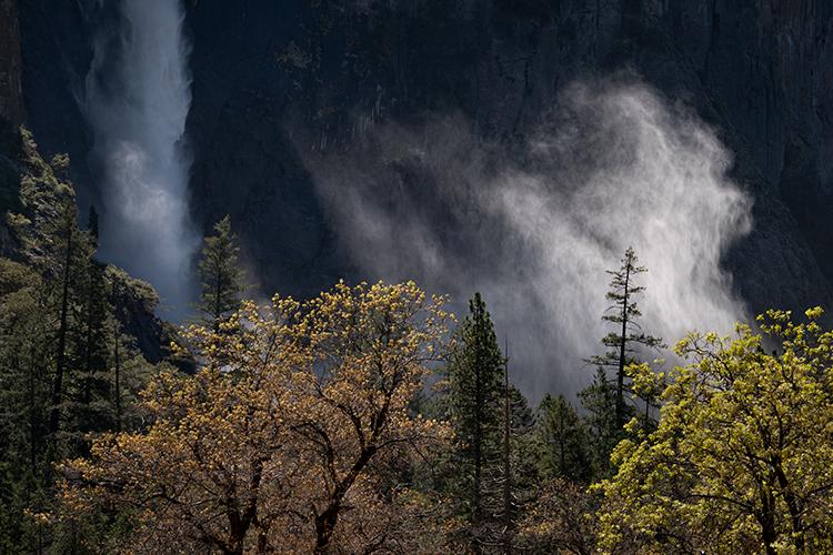 yosemite national park, yosemite, ca, california, trees, black oak, meadow, el capitan, flora, fog, mist, steam, sunrise, morning, bridalveil falls, falls, water, photo