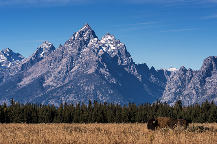 mountains, Wyoming, wy, Tetons, Grand Teton Park, landscape, Fall, trees, aspens, fall color, jackson, oxbow bend, sunrise, snake river, buffalo, photo