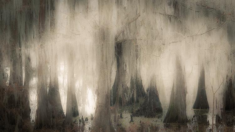 cado lake, texas, tx, bald cypress, cypress, trees, moss, spanish moss, bayou, marsh, swamp, la, Louisiana, caddo lake, photo