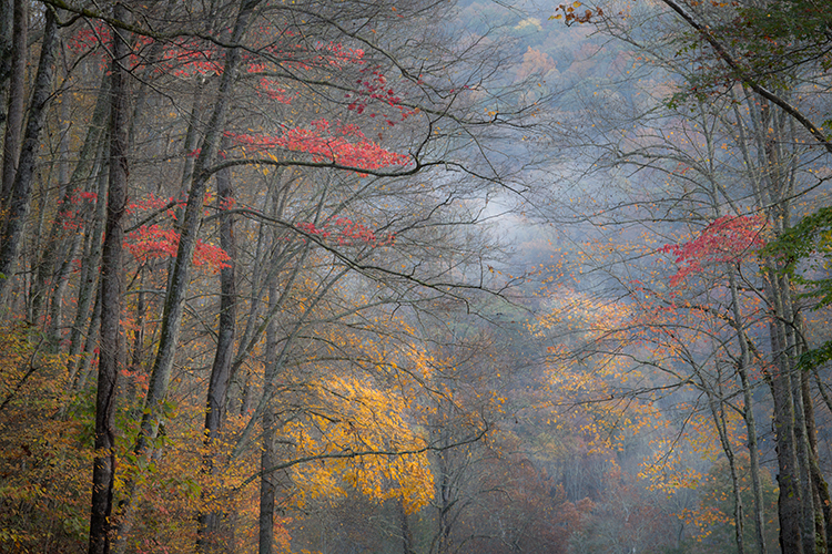 great smoky national park, smokys, mountains, fall, water, nc, tn, north carolina, tennessee, maples, colors, national, park, flora, trees, oconaluftee, river, fog, sunrise, fog, photo