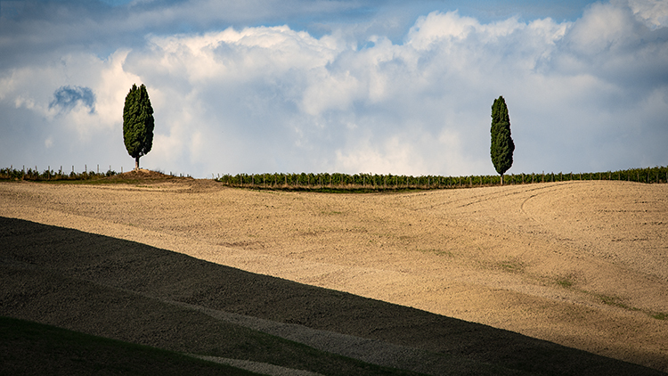 europe, italy, tuscany, pienza, siena, villa, wine, grapes, fields, sunset, clouds, valley, val d'orchia, sunrise, cypress, trees, flora, photo