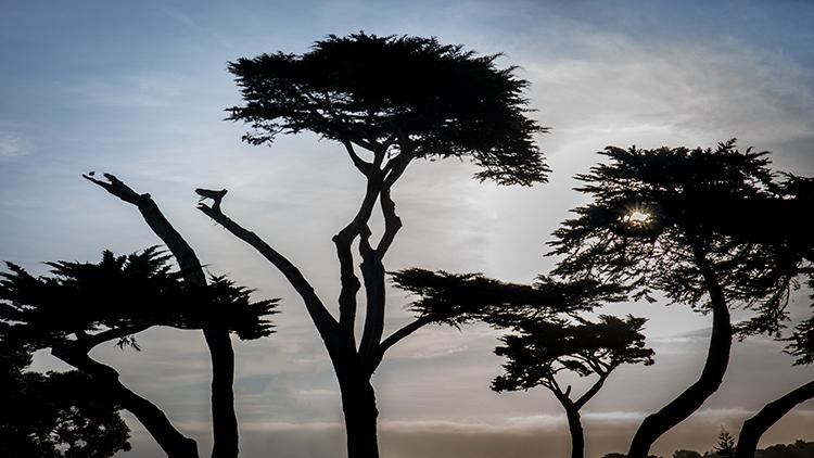 monterey, bay, ca, california, sunrise, water, ocean, pacific, flora, aloes, aloe, cypress, sunrise, trees, surf, photo