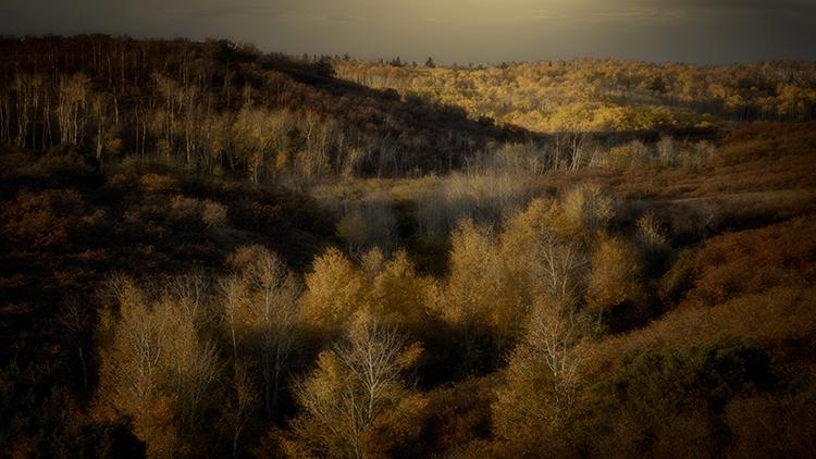 colorado, co, fall, san juan, owl creek, aspens, trees, flora, mountains, colorado plateau, sunrise, dallas divide, ridgway, backlight, rockies, rocky mountains, , photo