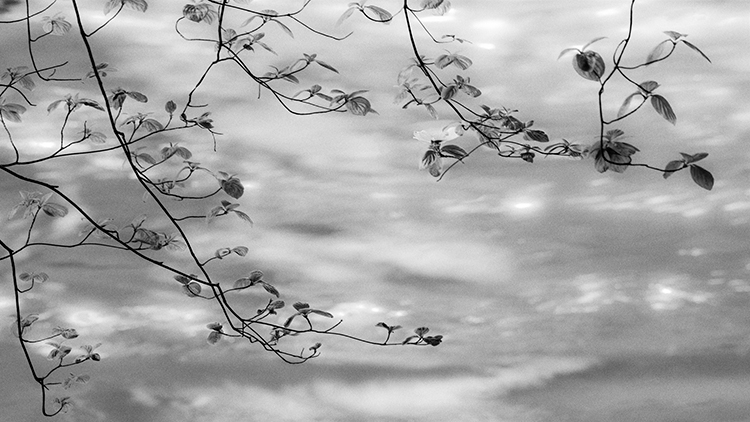 yosemite national park, yosemite, merced, river, merced river, valley, spring, bloom dogwoods, flora, sierra, yosemite valley, water, sunset, bw, black, white, photo