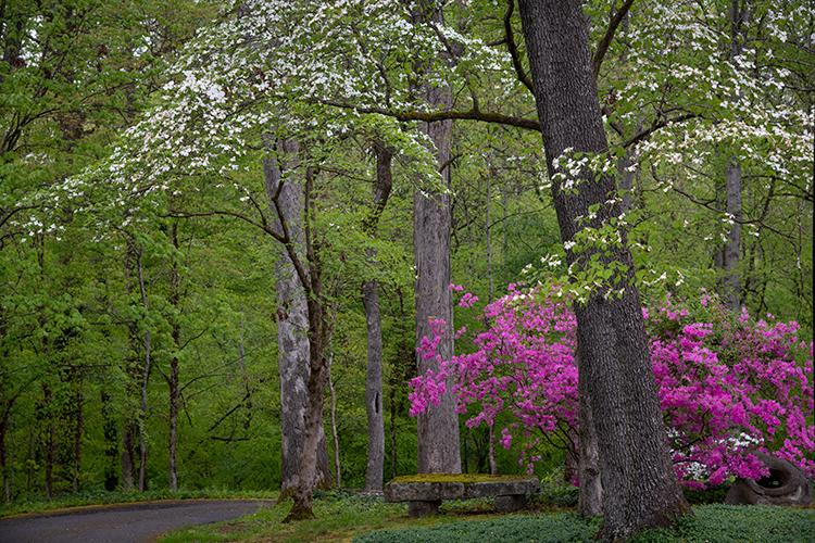 great smoky mountains, spring, wildflowers, flora, appalachian, Tennessee, north carolina, east usa, trillium, phacelia, dogwoods...