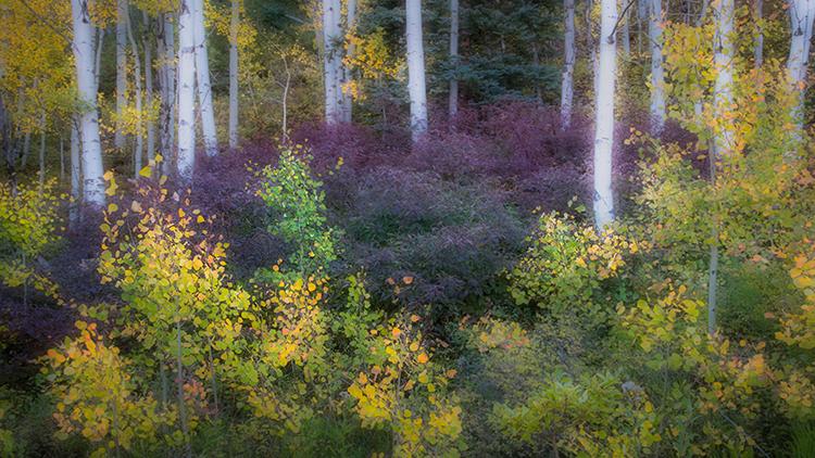 colorado, co, san juan mountains, mountains. trees, aspens, fall, fog, atmospherics, owl creek, snow, flora, autumn, rockies, purgatory, durango, photo