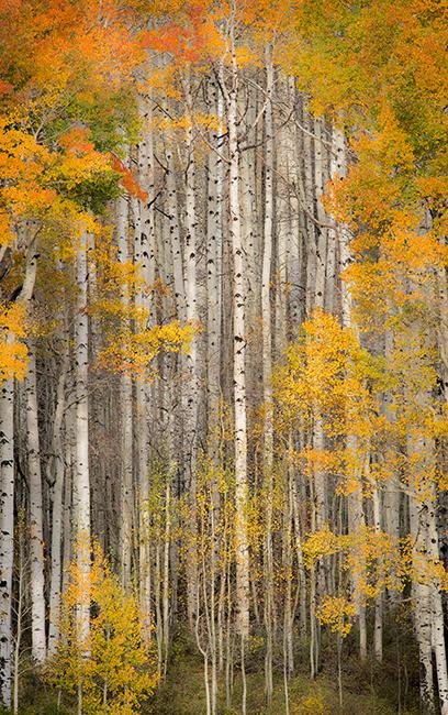 Fall colors, fall, trees, aspens, san juan mountains, co, colorado, durango, rockies, mountains, photo