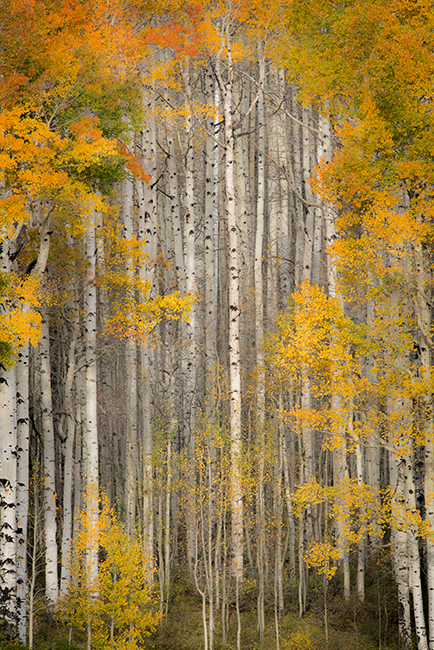 Fall colors, fall, trees, aspens, san juan mountains, co, colorado, durango, rockies, mountains, photo