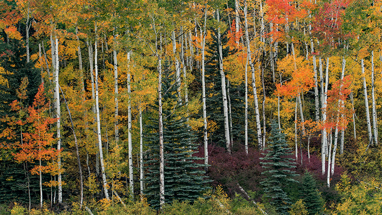 Rocky Mountains, San Juan mountains, rockies, san juans, fall, autumn, color, trees, aspen, pine, fir, colorado, co, owl creek, rainbow, ridgway, photo