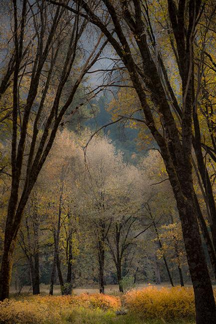 Yosemite, Sierra, mountains, yosemite valley, fall, fall color, fall,  wildlife, flora, el capitan meadow, black oaks, photo